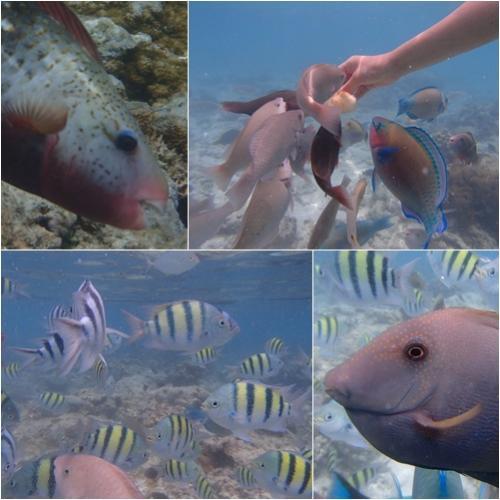 サイパン/マニャガハ・魚