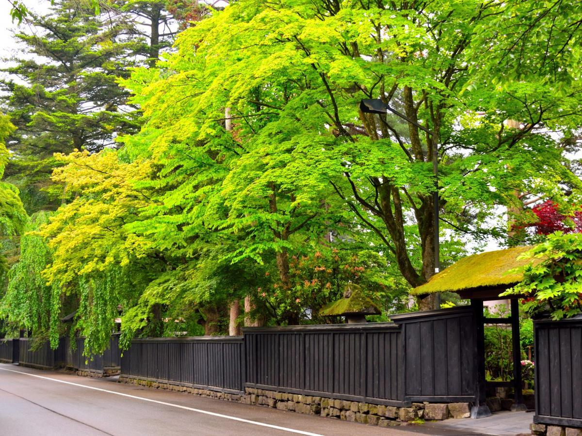 秋田 県 コロナ