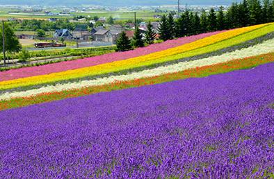 これぞ、ザ・北海道!北の大地を満喫するなら、富良野・美瑛へ♪
