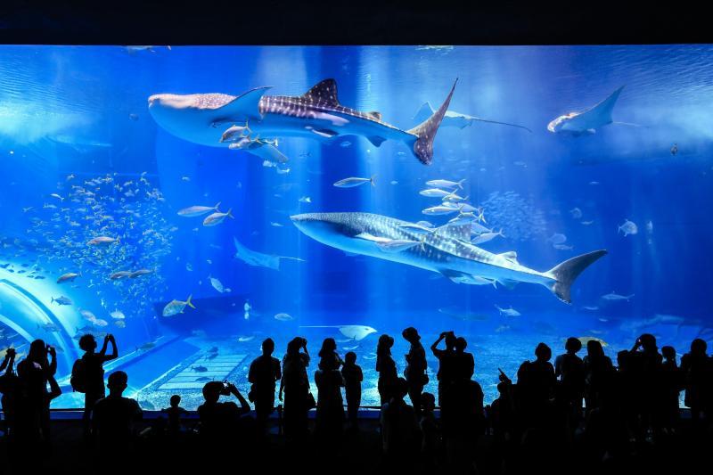 2021年】沖縄観光の決定版!おすすめスポット39選♪【トラベルコ】